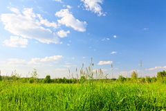 Grünes Feld unter blauem bewölktem Himmel mit Sonne lizenzfreie stockfotografie