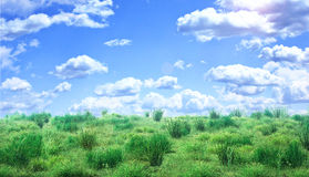 Grünes Feld unter blauem Himmel mit Wolken Stockbilder