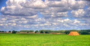 Grünes Feld unter dem blauen Himmel Stockfotografie