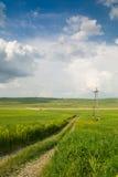 Grünes Feld unter dem blauen Himmel Stockfotos