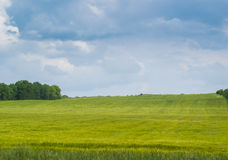 Grünes Feld unter dem blauen Himmel Lizenzfreie Stockbilder
