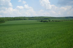 Grünes Feld unter dem blauen Himmel Lizenzfreies Stockfoto