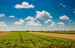 Grünes Feld unter schönem dunkelblauem Himmel Stockfotografie