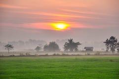 Grünes Feld unter Sonnenunterganghimmel Stockfotos