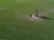 Grünes Feldauto und alleinbaum in Weißrussland Stockfoto