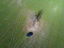Grünes Feldauto und alleinbaum in Weißrussland Brummen-Foto Stockfoto