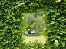 Grünes Fenster Stockfotografie