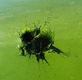 Grünes flüssiges Spritzen Stockbilder