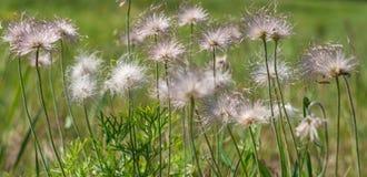 Grünes flaumiges Gras mit Sonnenlicht - verwischen Sie Hintergrund Stockbilder