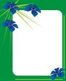 Grünes Fotofeld mit blauen Blumen Lizenzfreies Stockfoto