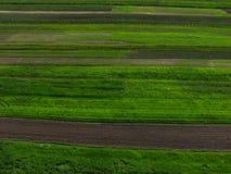 Grünes Frühlingsfeld Stockfotos