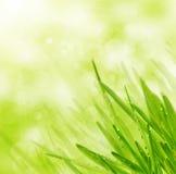 Grünes Frühlingsgras auf bokeh Hintergrund Lizenzfreies Stockbild
