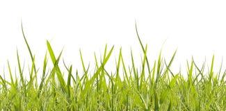 Grünes Gras auf Weiß Stockfoto