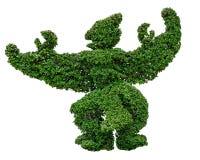 Grünes garuda formte den Baum, der auf weißem Hintergrund lokalisiert wurde stockfotografie