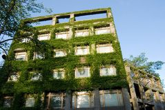 Grünes Gebäude Stockfotos
