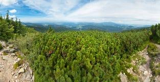 Grünes Gebirgspanorama Stockbilder