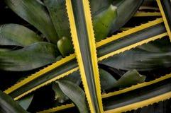 Grünes gelbes Blatt, botanischer Garten (Rio de Janeiro, Brasilien) Stockbild