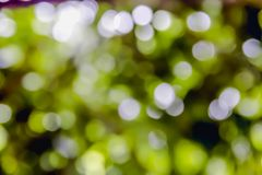 Grünes, gelbes bokeh burry Lizenzfreies Stockbild