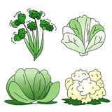 Grünes Gemüse Lizenzfreies Stockfoto