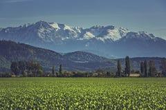 Grünes Getreidefeld und -berge Lizenzfreie Stockfotos
