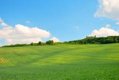 Grünes gewelltes Frühlingsfeld und blauer Himmel Lizenzfreie Stockbilder