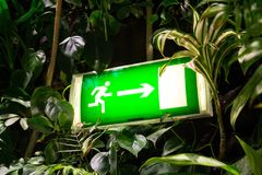 Grünes glänzendes Ausgangszeichen auf lebender grüner Wand, vertikaler Garten Stockbilder