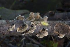 Grünes Gleiskettenfahrzeug auf Pilz bedeckte Glied stockfoto