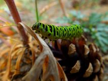 Grünes Gleiskettenfahrzeug von swallowtail Stockfoto