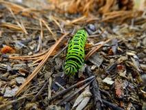 Grünes Gleiskettenfahrzeug von swallowtail Lizenzfreie Stockfotos