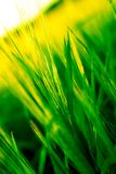 Grünes Gold Stockbild