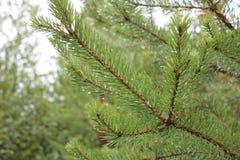 Grünes grünes Grün Lizenzfreie Stockbilder