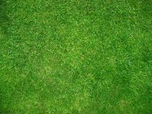Grünes grünes Gras Stockbild