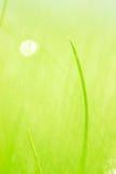 Grünes grünes Gras Stockfotografie