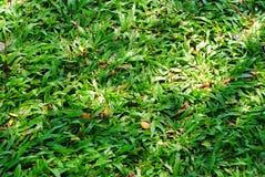 Grünes grünes Gras Lizenzfreies Stockfoto