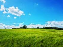 Grünes grünes Gras Lizenzfreie Stockbilder