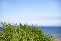 Grünes Gras über Seehintergrund und blauem Himmel. Lizenzfreies Stockbild