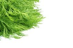 Grünes Gras über weißem Hintergrund Stockbilder