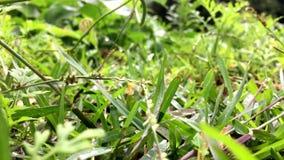 Grünes Gras stock footage