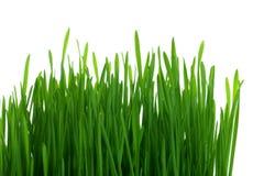 Grünes Gras Lizenzfreie Stockfotografie
