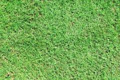 Grünes Gras Lizenzfreie Stockfotos