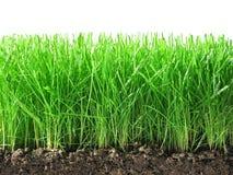 Grünes Gras. Stockfoto
