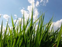 Grünes Gras 3 Stockbild