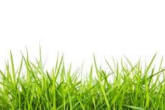 Grünes Gras Stockfoto