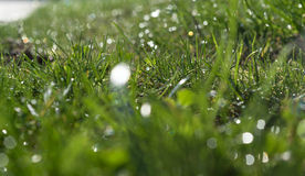 Grünes Gras Stockbilder