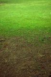 Grünes Gras Lizenzfreies Stockfoto
