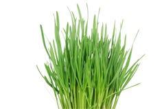 Grünes Gras 3 Stockfotografie
