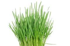 Grünes Gras 4 Lizenzfreies Stockbild
