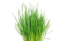 Grünes Gras 2 Stockbild