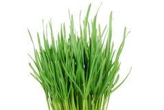 grünes Gras 1 Stockbilder
