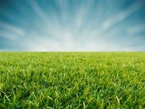 Grünes Gras auf blauem Hintergrund Lizenzfreies Stockfoto